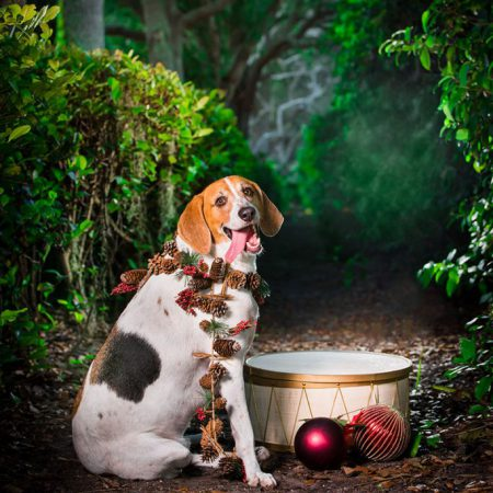 Christmas portrait of a dog next to a drum