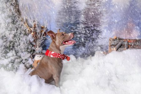 Christmas portrait of an excited dog