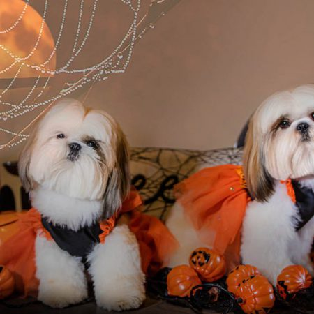 Halloween portrait of two dogs with a moon and shadow of a cat
