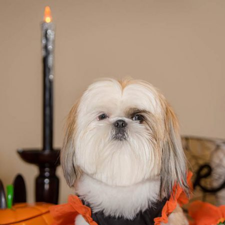 Halloween portrait of a dog