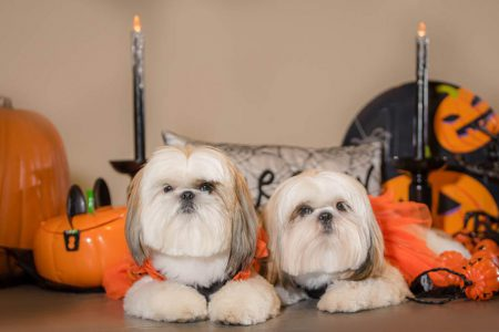 Halloween portrait of two dogs