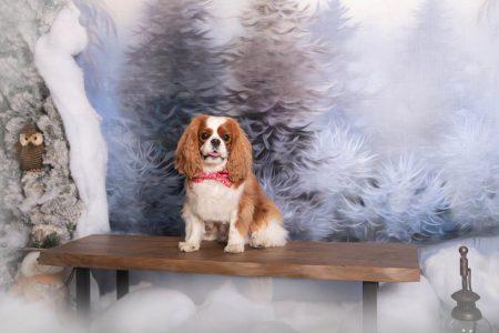 Christmas portrait of a dog