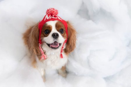 Excited dog with a Christmas hat on