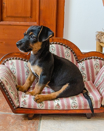 Concierge Services - Dog sitting on small couch