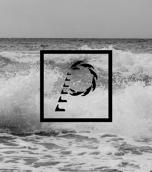 Thank you Photo - Palm Collective Marketing logo with black and white ocean background