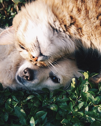Pet Sitting Services - Orange cat and dog laying in grass